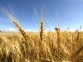Китай выделил один миллиард на закупку украинского урожая зерновых