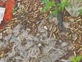 В Мексике на свалке нашли около двух тысяч фрагментов костей рук