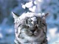 В Украине на Новый год будет снежно и холодно