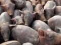 В Крыму фиктивная вакцинация животных привела к вспышке болезней