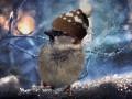 Погода в Украине на 12 февраля: Мокрый снег, дожди и ветер