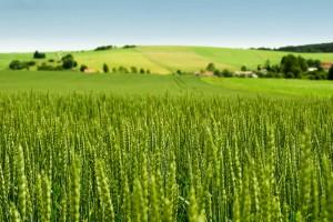 Послы стран G7 поддерживают открытие рынка земли в Украине