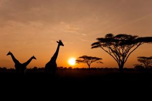 Украина открыла торговый дом в Африке