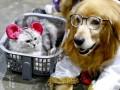 В США поддержали запрет на потребление мяса кошек и собак
