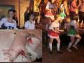 Во Львове возник скандал из-за публичного закалывания свиней в одном из ресторанов