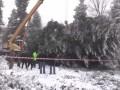 В Ивано-Франковской области срубили главную елку страны
