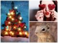 Позитив дня: спасение суслика, Новый год в Киеве и любовь к коллегам