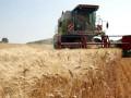 В Украине ожидается уменьшение урожая зерновых культур