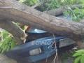 В Киеве упавшее дерево повредило четыре автомобиля