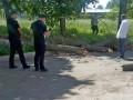 В Черкассах на школьников упало дерево