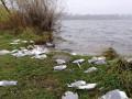 Возле озера в Тернополе нашли сотню мертвых птиц