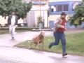 Злобный козел не дает жизни прохожим в Бразилии (ВИДЕО)