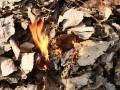 Во львовском детсаду во время пожара погибла охранница