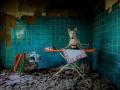 Бультерьер-фотомодель стал героем соцсетей