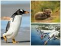 Позитив дня: рождественский пингвин и музеи будущего
