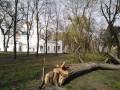 Ураган на Черниговщине повалил деревья
