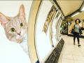 В лондонском метро рекламные постеры заменили портретами котов