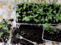 Вырастить из семян или купить рассаду: Как сэкономить в сезон посадок