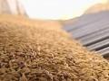 Стало известно, сколько пшеницы экспортировал Крым, несмотря на санкции