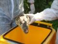 В Крыму во дворе дома разбросали головы крокодилов