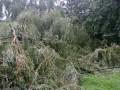 Львовом пронесся ураган, ломая деревья и туалеты, поджигая столбы