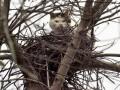 В России судебные приставы выселили из общежития кота