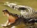 В Зимбабве крокодилы съели пастора,