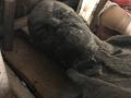 В Днепропетровской области на аукцион выставили памятник Ленину