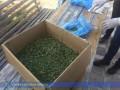 Поставки наркотиков в РФ организовал бывший правоохранитель из Луганской области - СБУ