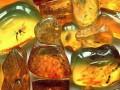 В районе Сарн на Ровенщине собрались тысячи добытчиков янтаря