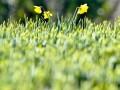 В Киеве за несвоевременно скошенную траву будут штрафовать