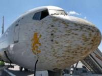 В Эфиопии самолет на смог приземлиться из-за облака саранчи