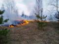 В Черниговской области горит лес: из-за масштабов пожара задействовали авиацию