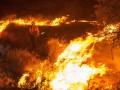 В Калифорнии из-за лесных пожаров объявили режим ЧС