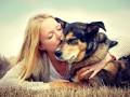 В США пес ценой своей жизни спас семью от стрелка
