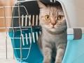 В Украине изменились правила перевозки домашних животных