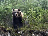 В США медведь разгромил машину и уснул на сидении