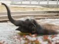 Фотогалерея: Слон - огонь. Киевский зоопарк показал нового слоненка