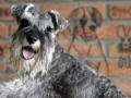 Суд Лос-Анджелеса запретил собакам лаять дольше десяти минут