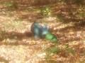 В Лисичанске возле школы упала часть ракеты ЗРК Оса