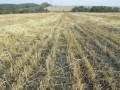 Регионалы предложили рассчитываться за аренду земли исключительно деньгами - Ъ