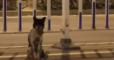 В Китае пес почти три месяца ждет умершую хозяйку