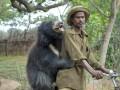 Ручной медвежонок-губач покорил интернет (фото)