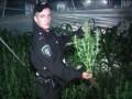 Запорожские милиционеры уничтожили плантацию конопли на 20 млн грн