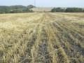 Запорожские чиновники раздали исторические земли