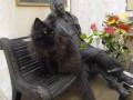 В Москве из Булгаковского дома украли кота Бегемота
