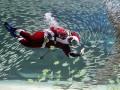 Животные недели: плаванье с сардинами и воспитание морских пехотинцев