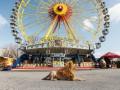 Лев в большом городе: Как бродячая собака превратилась в льва