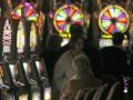 Рада ограничила любителей азартных игр в праве распоряжаться своим имуществом