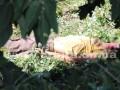 В Покровске погиб коммунальщик в ходе распилки деревьев
